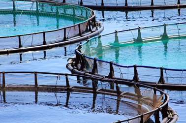 Rosa Quintana consensuará con el sector la ley de acuicultura de Galicia